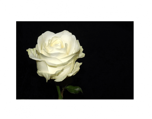 So very sorry for your family\'s loss of Barbara Sue. She surely must have been a wonderful person. I\'ll meet her in heaven one day.  :)  May you find peace and hope which she had in the  grace of our LORD Jesus if you don\'t know him. Psalm 116:15 Precious in the sight of the LORD is the death of his saints. - Joe T Massey