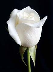 So very sorry for your family's loss of Jean. May the grace of our Lord give you peace and hope during this hard time.  Romans 10:9-10 - Joe T Massey
